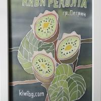 Kiwi harvest, Circulation: Unique;